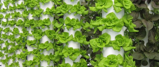 Vertical Farming methods