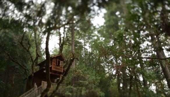 Treehouses1