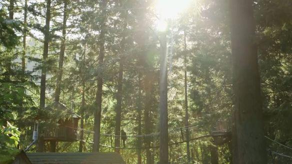 Treehouses5
